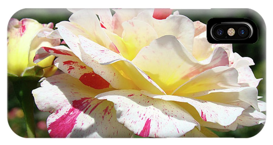 Rose IPhone X Case featuring the photograph Roses White Pink Yellow Rose Flowers 3 Rose Garden Art Baslee Troutman by Baslee Troutman