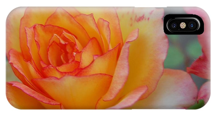 Rose IPhone X Case featuring the photograph Rosy Outlook by Jean Booth