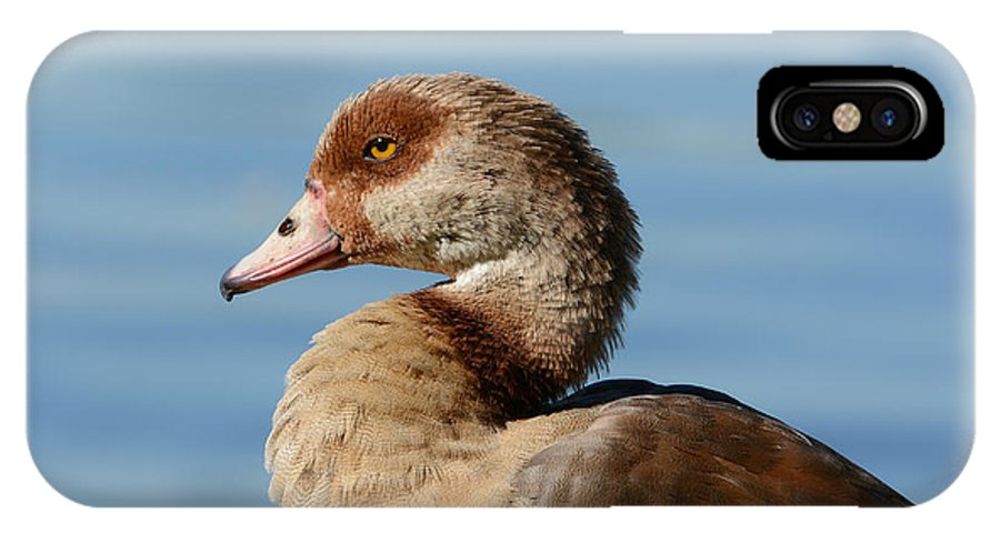 Egyptian Goose IPhone X Case featuring the photograph Royal Highness by Fraida Gutovich
