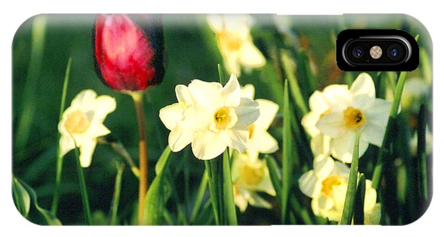 Tulips IPhone X / XS Case featuring the photograph Royal Spring by Steve Karol