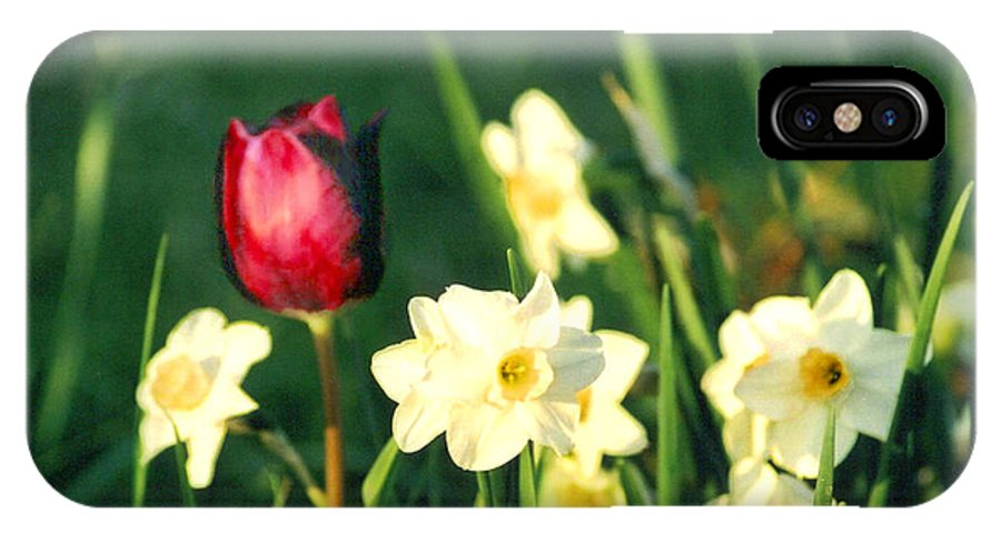 Tulips IPhone X Case featuring the photograph Royal Spring by Steve Karol