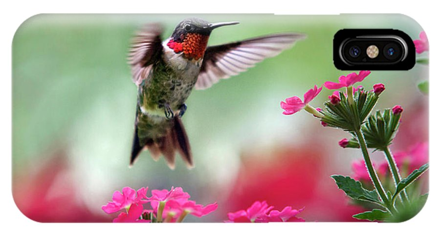Hummingbird IPhone X Case featuring the photograph Ruby Garden Jewel by Christina Rollo