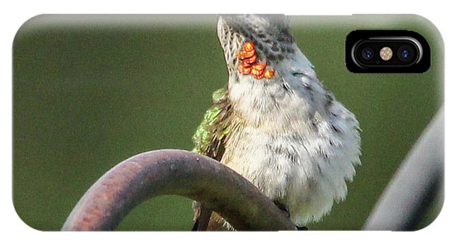 Green Bird IPhone X Case featuring the photograph Ruby-throated Hummingbird by Jo Anne Keasler