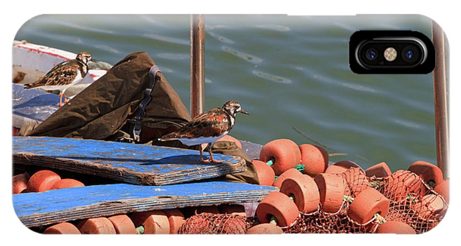 Ruddy Turnstone IPhone X Case featuring the photograph Ruddy Turnstones Perching On Fishing Nets by Louise Heusinkveld