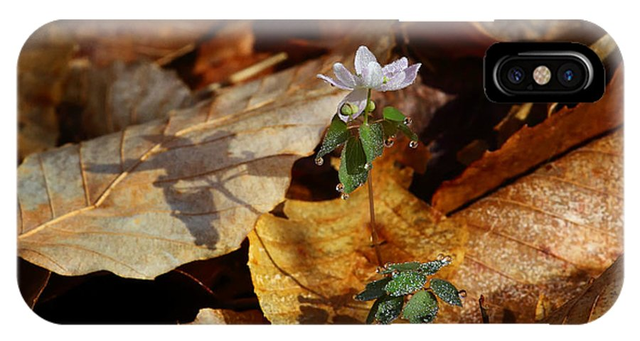 Rue Anemone IPhone X Case featuring the photograph Rue Anemone At Sunrise by Michael Dougherty