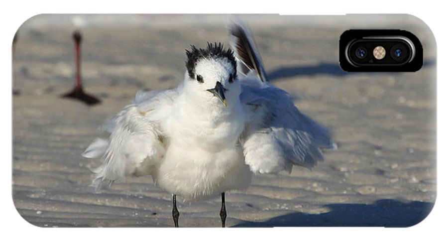 Gull Tern IPhone X Case featuring the photograph Ruffled Feathers by Barbara Bowen