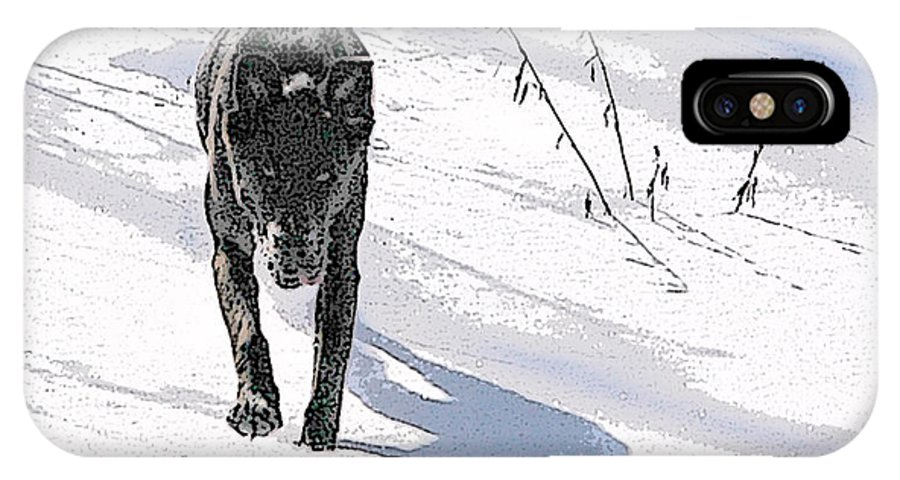 Dog IPhone Case featuring the photograph Run To Me by Jacqueline Milner