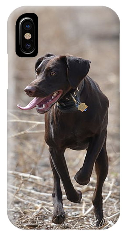 German Shorthaired Pointer IPhone X Case featuring the photograph Running Through The Fields by Tammy Mutka