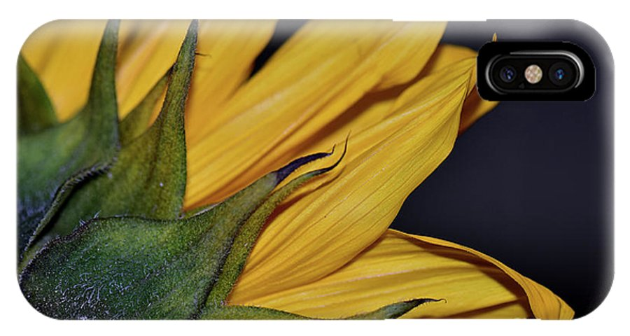 Sunflower IPhone X Case featuring the photograph Rustic Elegance by Lisa Renee Ludlum