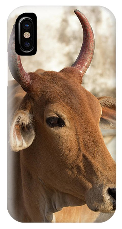 Asia IPhone X Case featuring the photograph Sacred Cow by Emily M Wilson