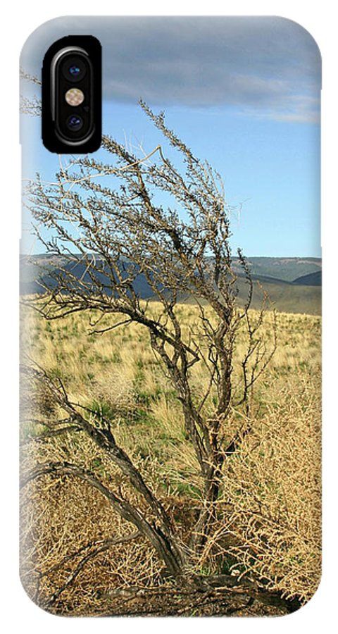 Pictures Of Washington State IPhone X Case featuring the photograph Sage Brush And Tumble Weed by Wendy Raatz Photography