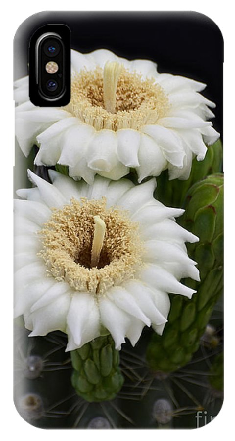 Arizona IPhone X Case featuring the photograph Saguaro Blooms II by Saija Lehtonen