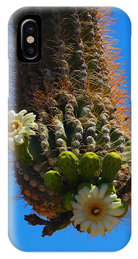 Saguaro IPhone X Case featuring the photograph Saguaro Elephant Trunk by James BO Insogna