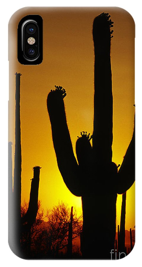 Southwest IPhone X Case featuring the photograph Saguaro Sunset by Sandra Bronstein