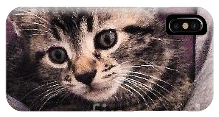 Photograph IPhone X Case featuring the mixed media Sam The Kitten by MaryLee Parker
