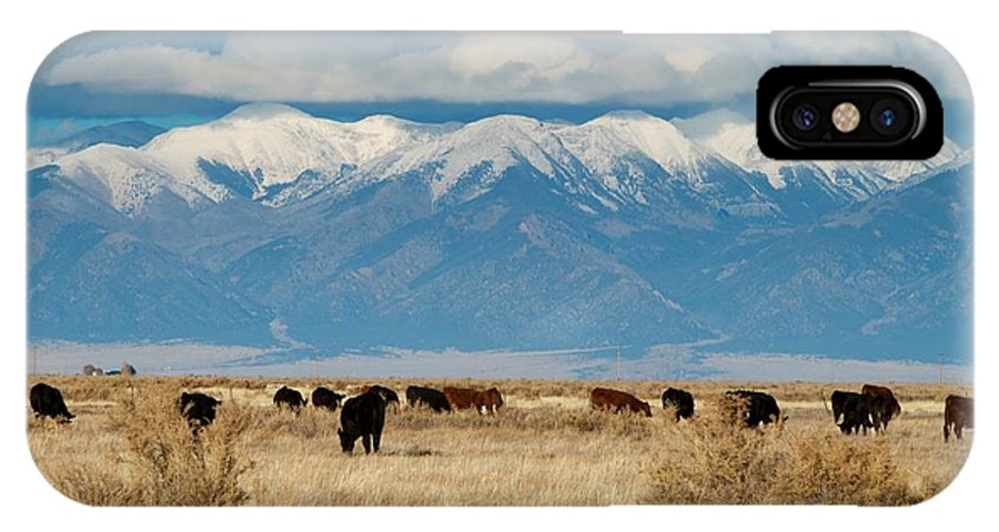 San Luis Valley IPhone X Case featuring the photograph San Luis Valley And Cattle by Chris Anthony