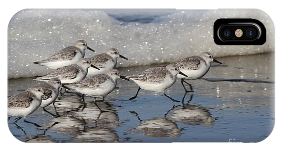 Sanderlings IPhone X Case featuring the photograph Sanderlings by Gary Wing