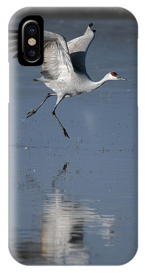 Sandhill Crane IPhone X Case featuring the photograph Sandhill Crane Running On Water by Gary Langley