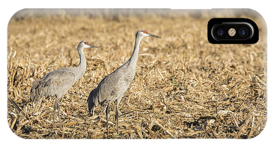 Sandhill Cranes IPhone X Case featuring the photograph Sandhill Cranes 2015-2 by Thomas Young