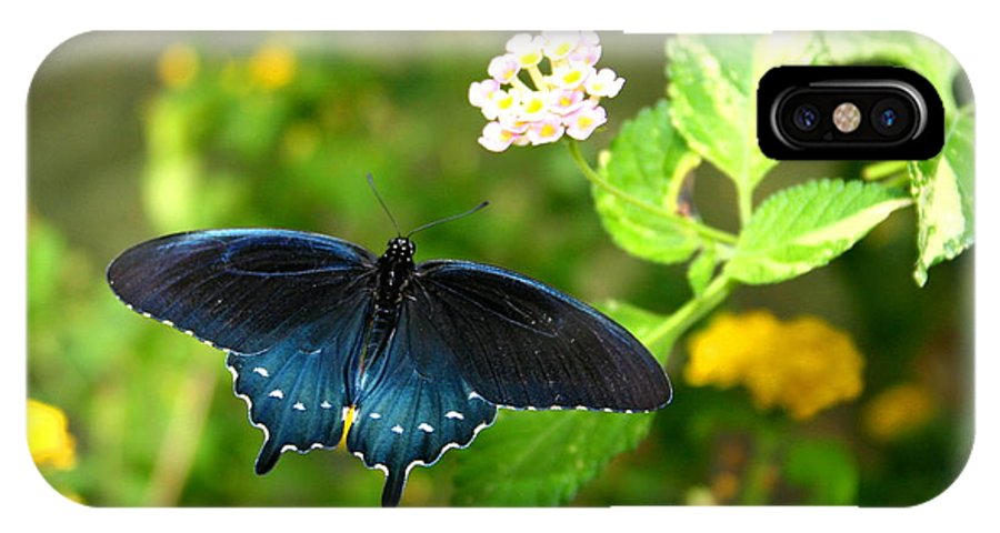 Bug IPhone Case featuring the photograph Sapphire Swallowtail by David Dunham
