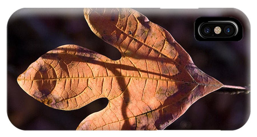 Sassafras IPhone X Case featuring the photograph Sassafras Leaf In Evening Sun by Douglas Barnett