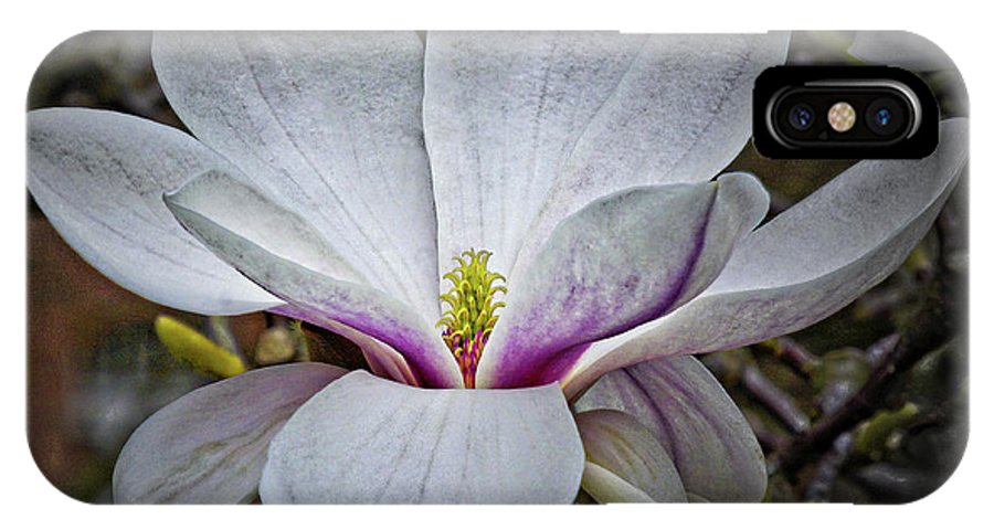 Botany IPhone X Case featuring the photograph Saucer Magnolia - Magnolia Soulangeana by Urs Schweitzer