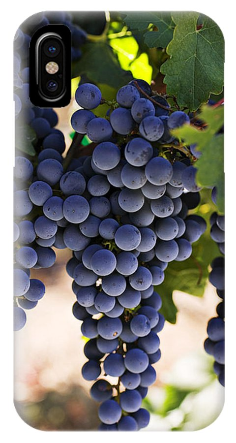 Sauvignon IPhone X Case featuring the photograph Sauvignon Grapes by Garry Gay
