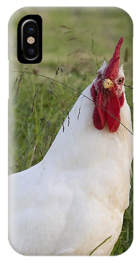 Rooster Farm Rural Chicken Bird White Red Curious IPhone X Case featuring the photograph Say What by Andrei Shliakhau