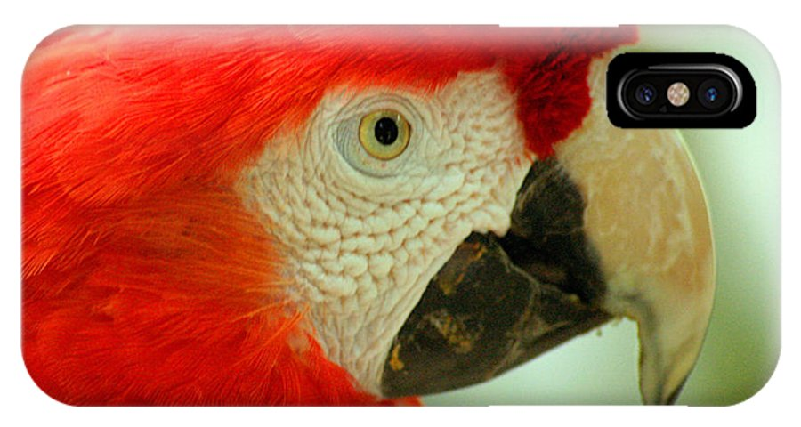 Parrot IPhone X Case featuring the photograph Scarlett Macaw South America by Ralph A Ledergerber-Photography