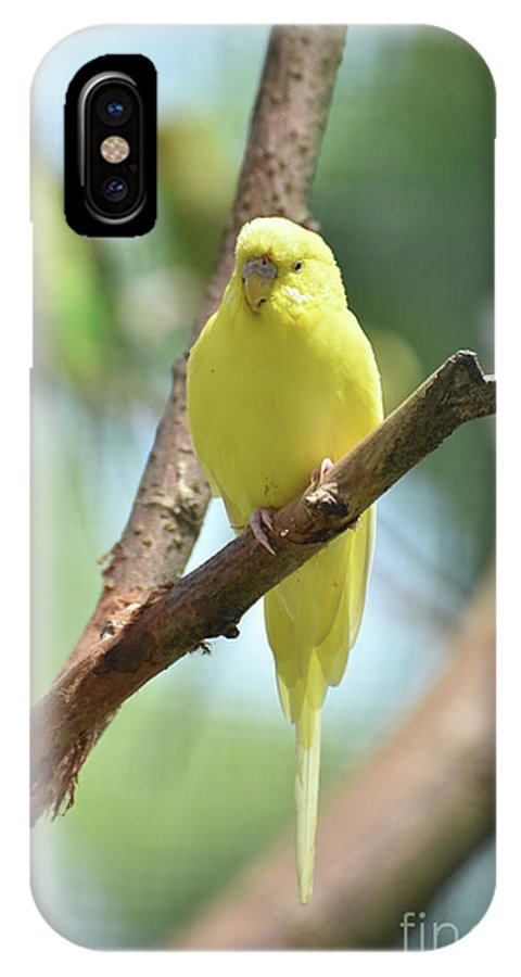 Budgie IPhone X Case featuring the photograph Scenic View Of An Adorable Yellow Parakeet by DejaVu Designs
