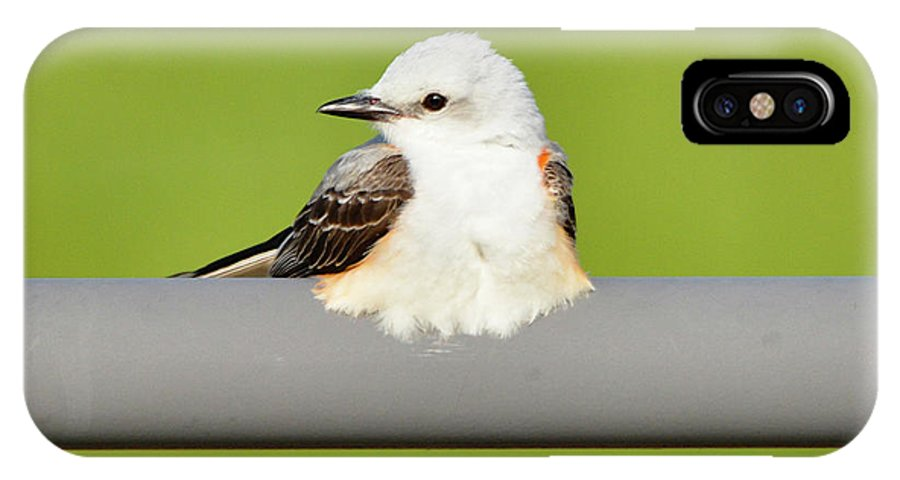 Bird IPhone X / XS Case featuring the photograph Scissor-tailed Flycatcher by Lindy Pollard