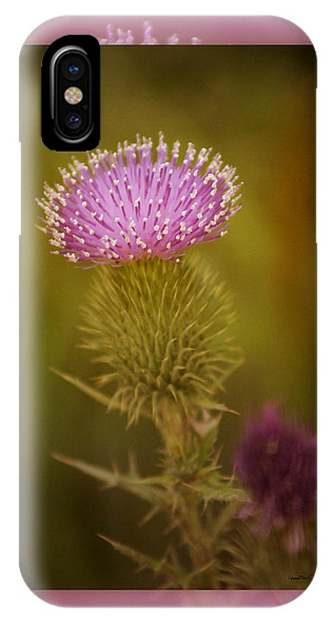 Floral IPhone X Case featuring the photograph Scotch Thistle by Holly Kempe