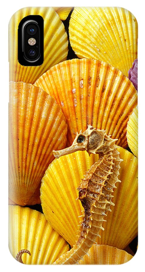 Seahorse IPhone X Case featuring the photograph Sea Horse And Sea Shells by Garry Gay
