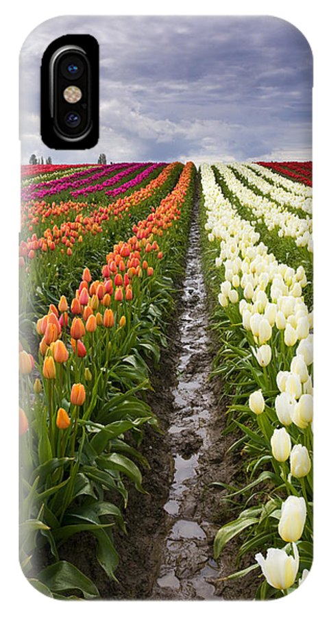 Tulips IPhone Case featuring the photograph Sea Of Color by Mike Dawson