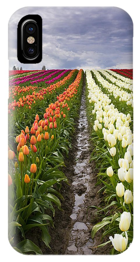Tulips IPhone X / XS Case featuring the photograph Sea Of Color by Mike Dawson