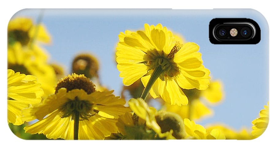 Daisies IPhone X Case featuring the photograph Sea Of Gold by Suzanne Gaff