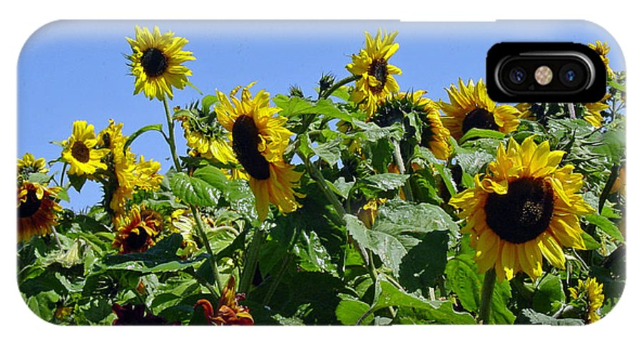 Sunflower IPhone X Case featuring the photograph Sea Of Sunshine by Suzanne Gaff