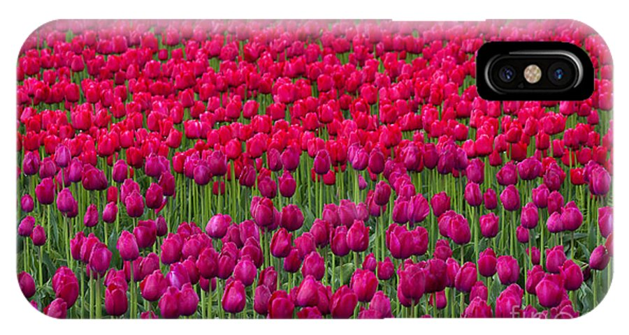 Tulips IPhone X Case featuring the photograph Sea Of Tulips by Mike Dawson
