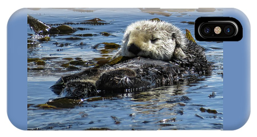 California Sea Otter IPhone X Case featuring the photograph Sea Otter by Helaine Cummins
