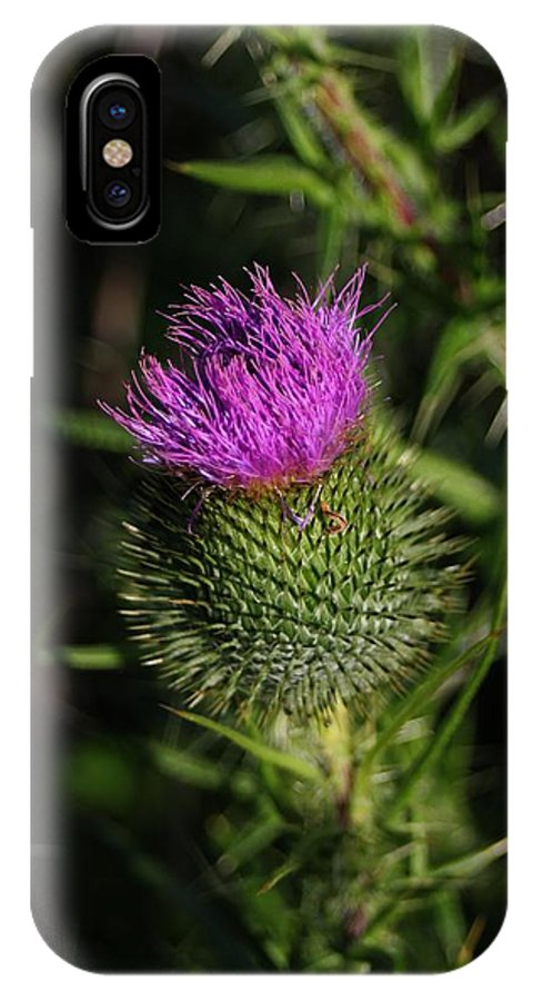 Wildflower IPhone X Case featuring the photograph Seacoast Wildflower I by Robert Morin