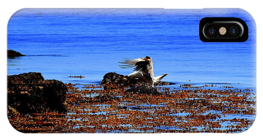 Rockport IPhone X / XS Case featuring the photograph Seagul Landing by John Kenealy