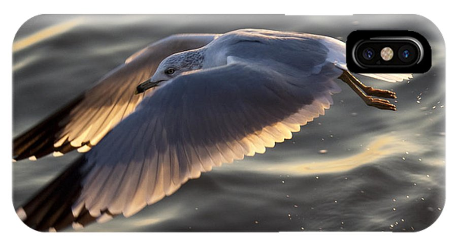 Seagull IPhone X Case featuring the photograph Seagull Flight by Dustin K Ryan