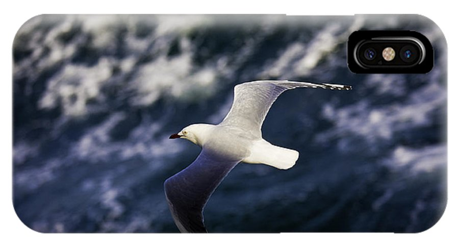 Seagull IPhone Case featuring the photograph Seagull In Wake by Sheila Smart Fine Art Photography