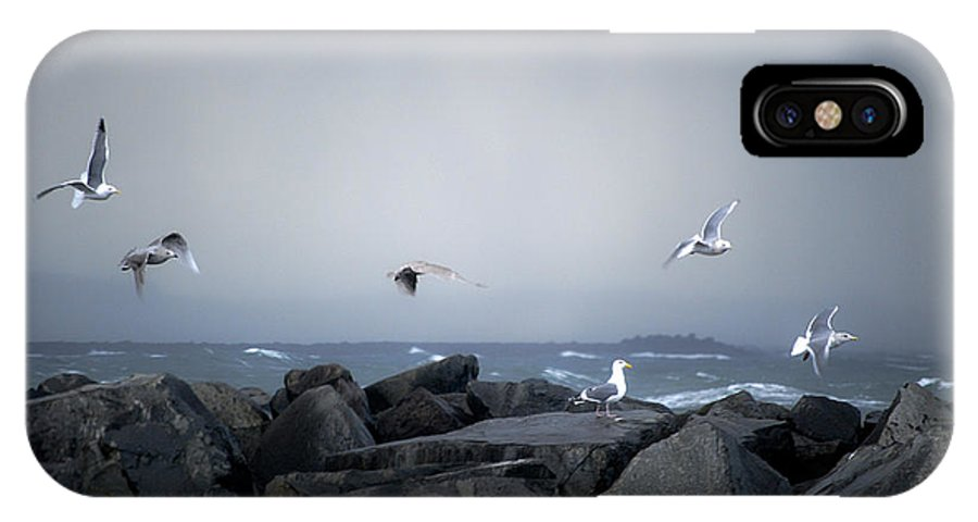 Landscape IPhone X Case featuring the photograph Seagulls In Flight by Larry Keahey
