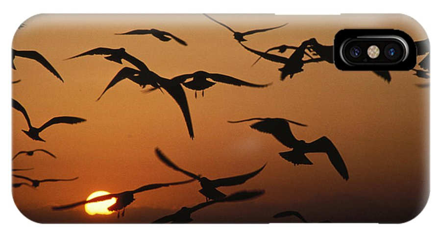 Birds IPhone Case featuring the photograph Seagulls In Sunset by Carl Purcell