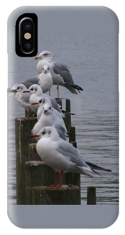 Birds IPhone X Case featuring the photograph Seaguls 4 by Cristina Rettegi