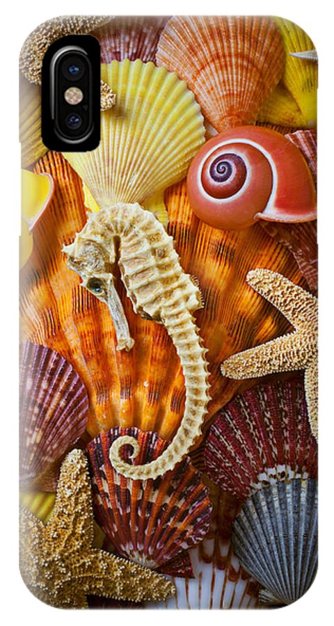 Seahorses IPhone X Case featuring the photograph Seahorse And Assorted Sea Shells by Garry Gay