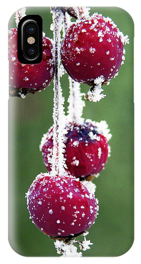Berries IPhone X Case featuring the photograph Seasonal Colors by Marilyn Hunt