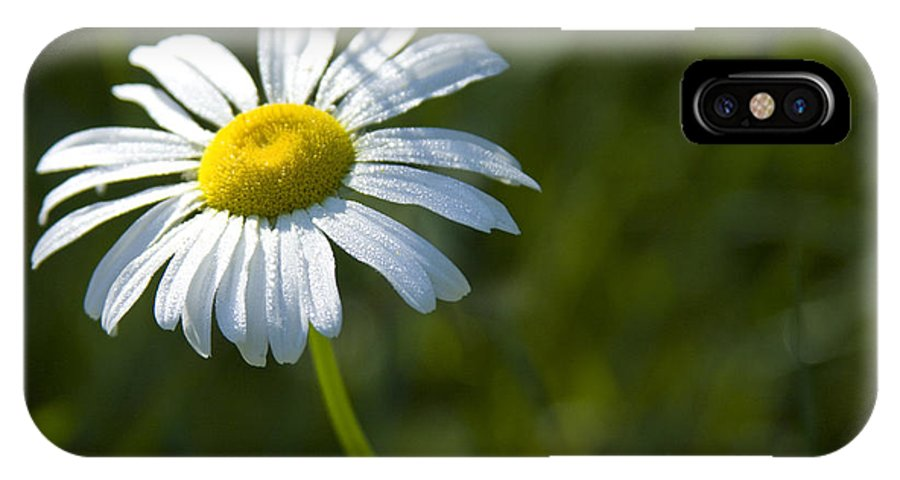 Daisy IPhone X Case featuring the photograph Searching For Sunlight by Idaho Scenic Images Linda Lantzy