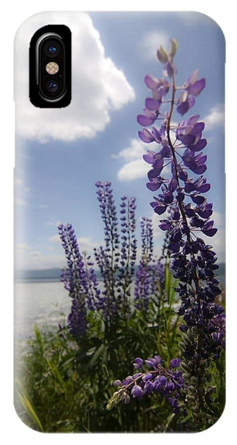 Lupine IPhone X Case featuring the photograph Seaside Lupine Flower by Sven Brogren